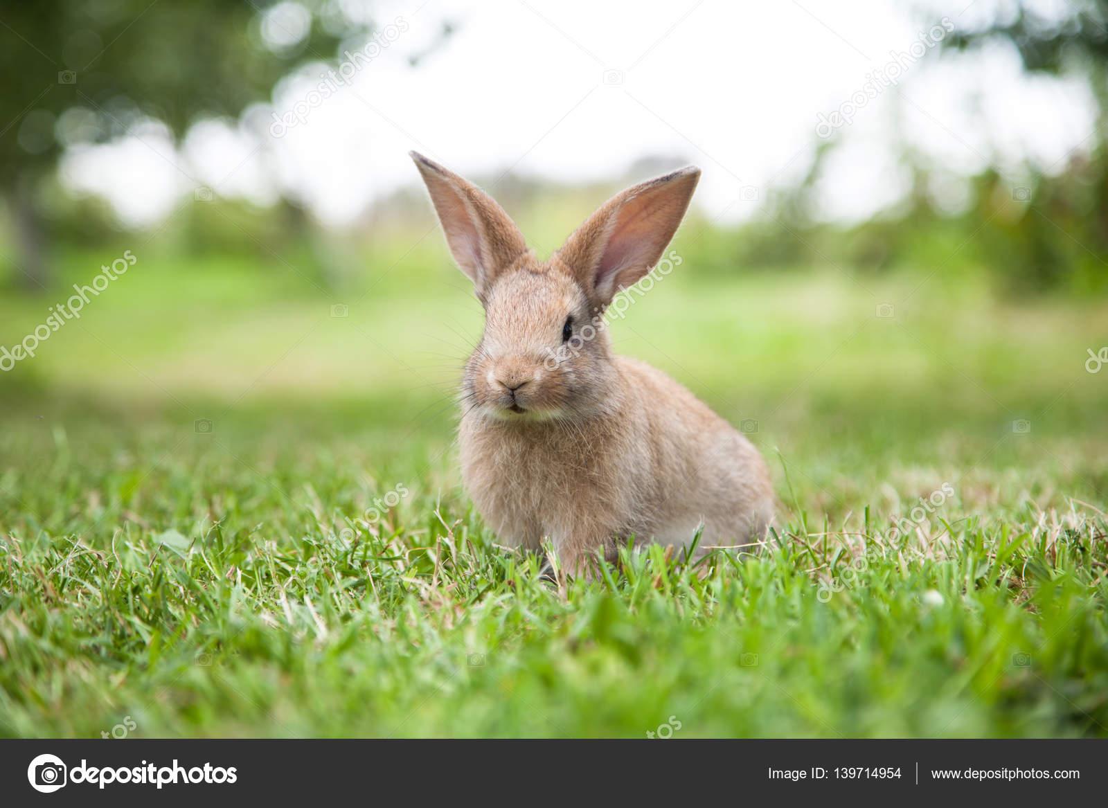 Картинка крольчиха