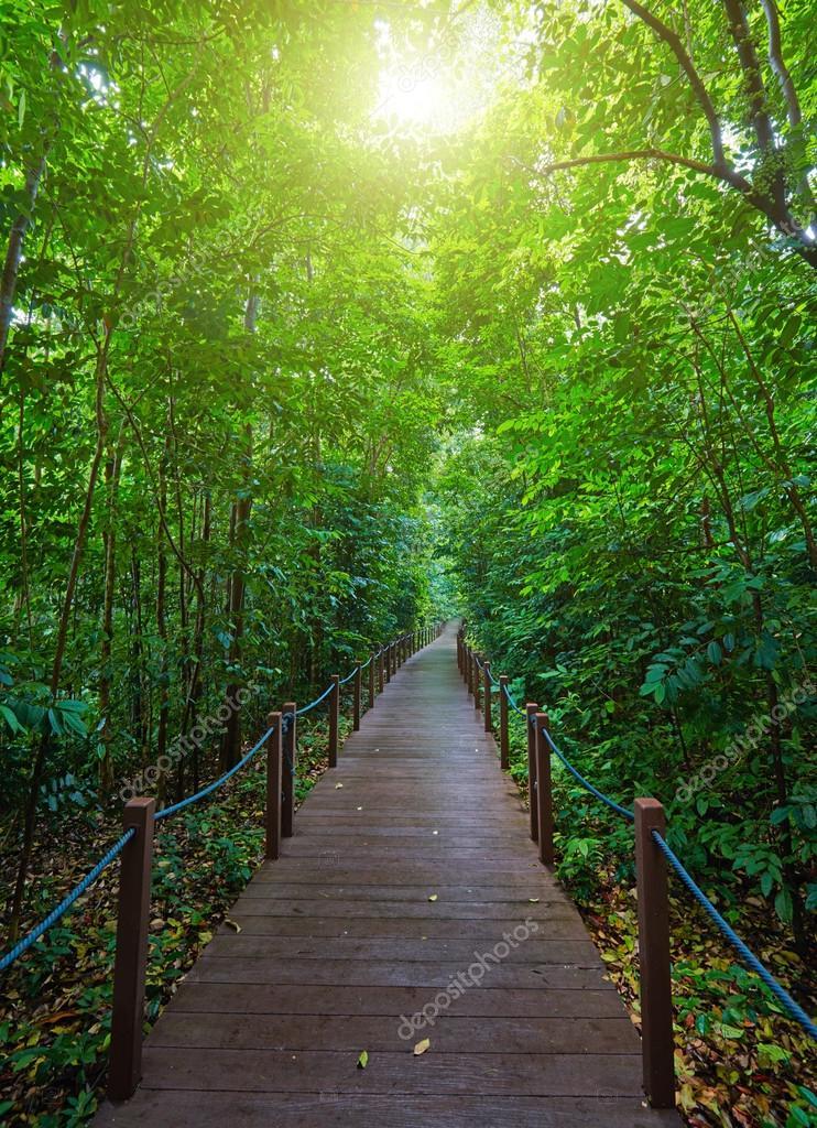 Фотообои Променад в зеленом парке Сингапура