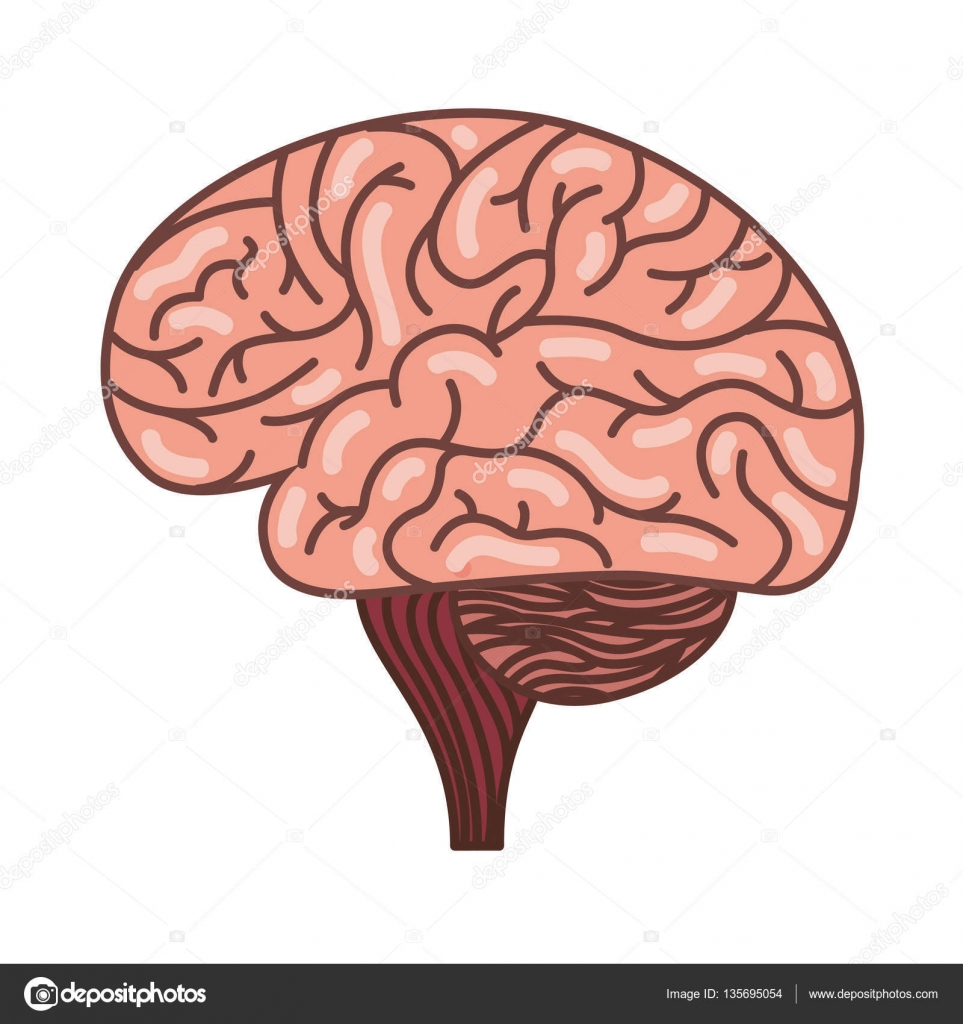human brain organ isolated icon — stock vector © yupiramos #135695054, Muscles