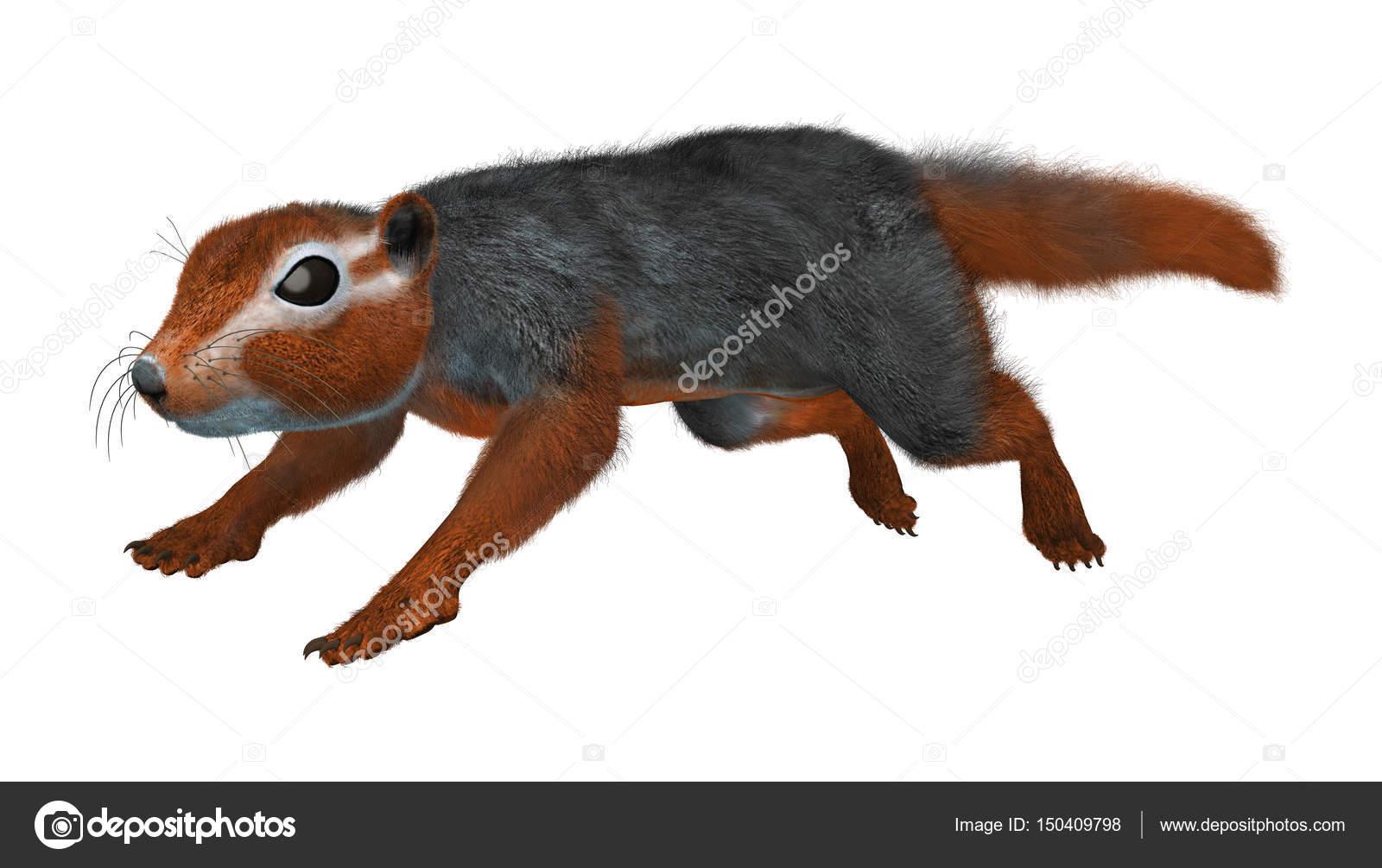 3d 渲染的红色布什松鼠或孤立的白色背景上的红腹海岸松鼠— 照片作者