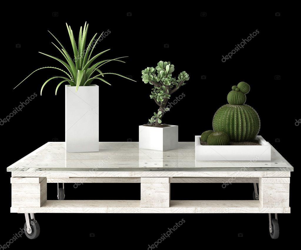 검은 배경에 고립 된 팔레트 테이블에 다 즙 식물 — 스톡 사진 ...