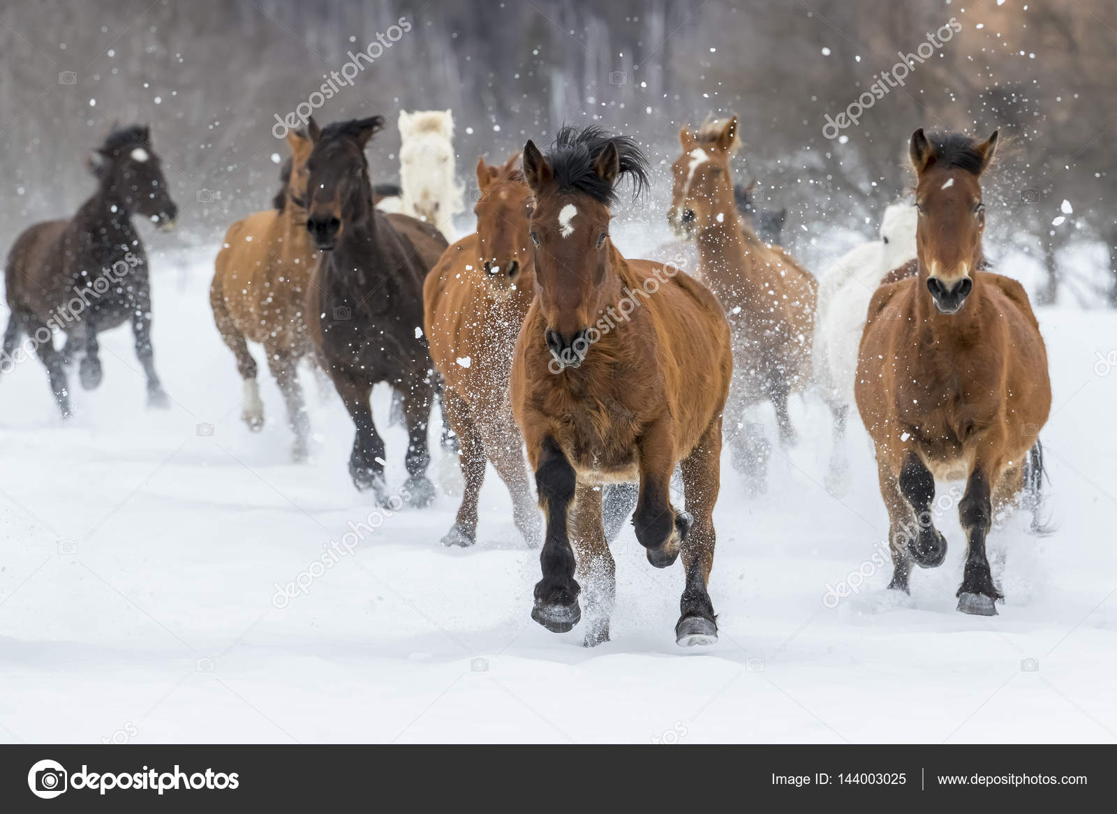 Horse running away in snow