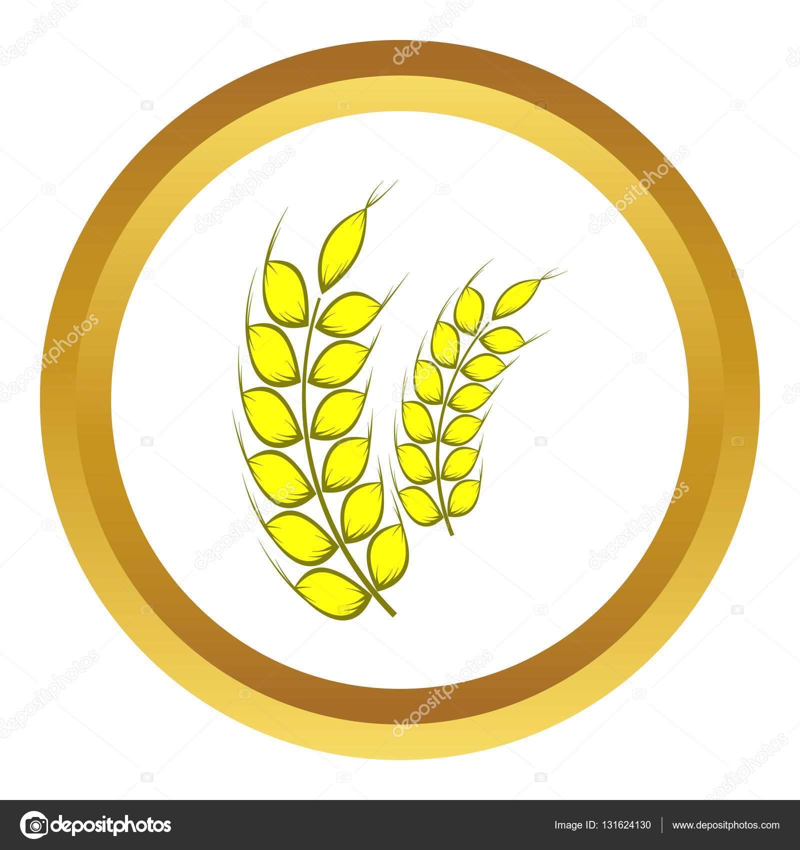两个成熟麦穗矢量图标 — 图库矢量图像08 yliv
