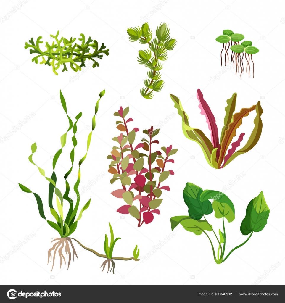 Aquarium plants set. Cartoon underwater algae. Seaweed ... Водоросли Png