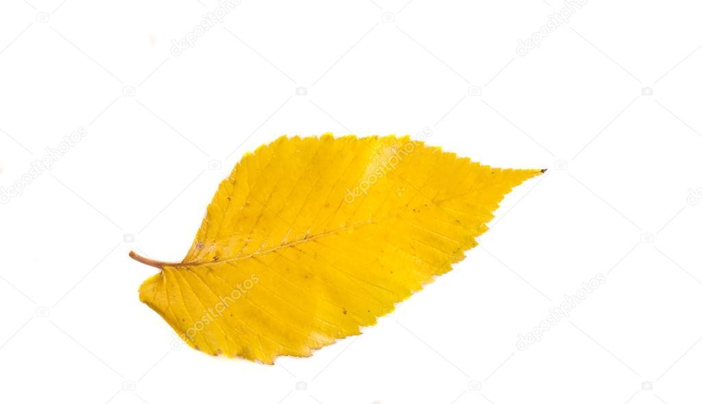 Картинки осенние золотая осень