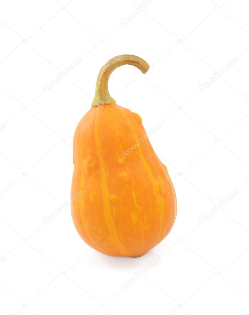 Грушевидная тыква выращивание 44