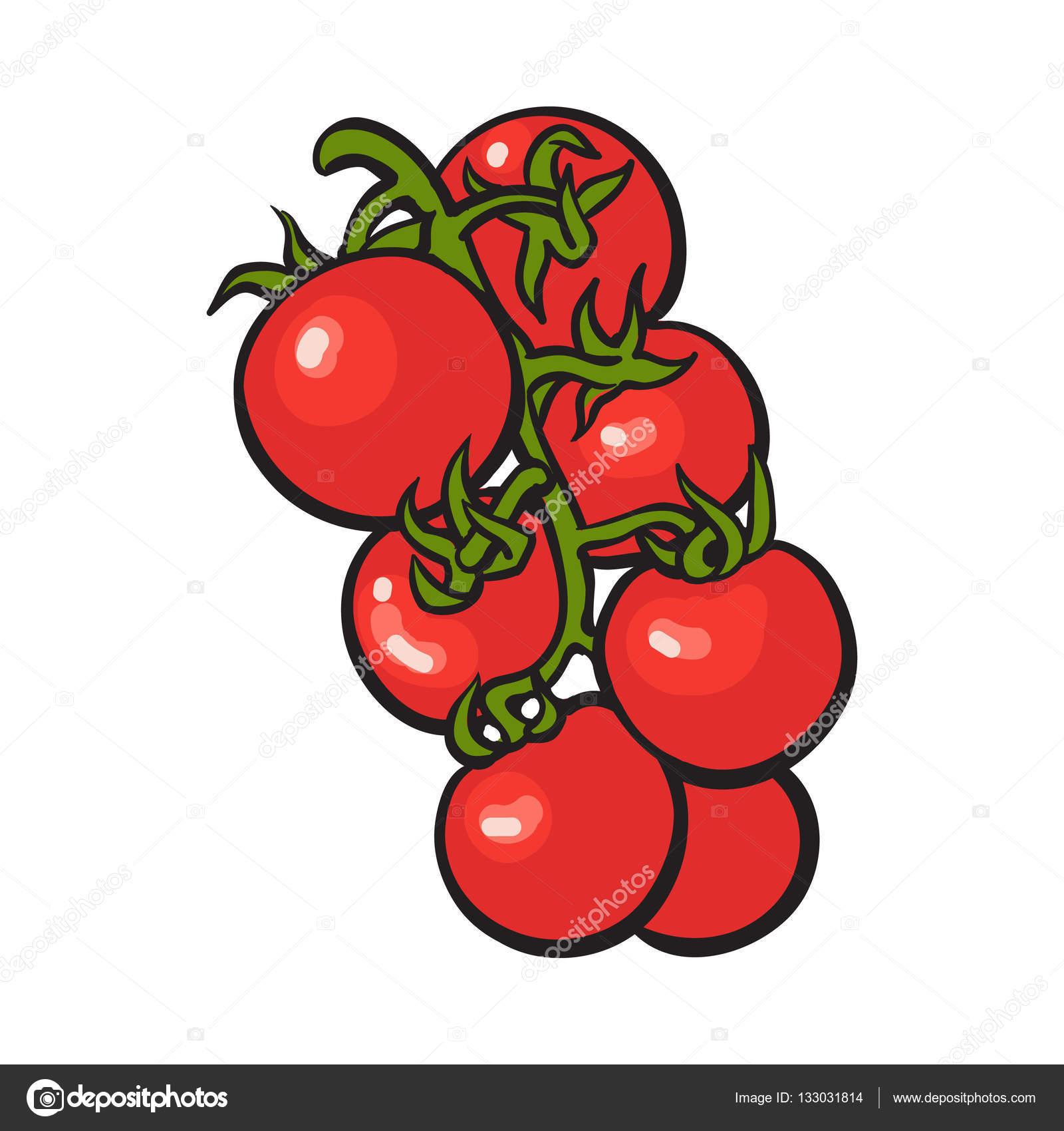 Stile di schizzo di disegno di pomodori ciliegia maturi lucidi rossi vettoriali stock - Dessin de tomate ...