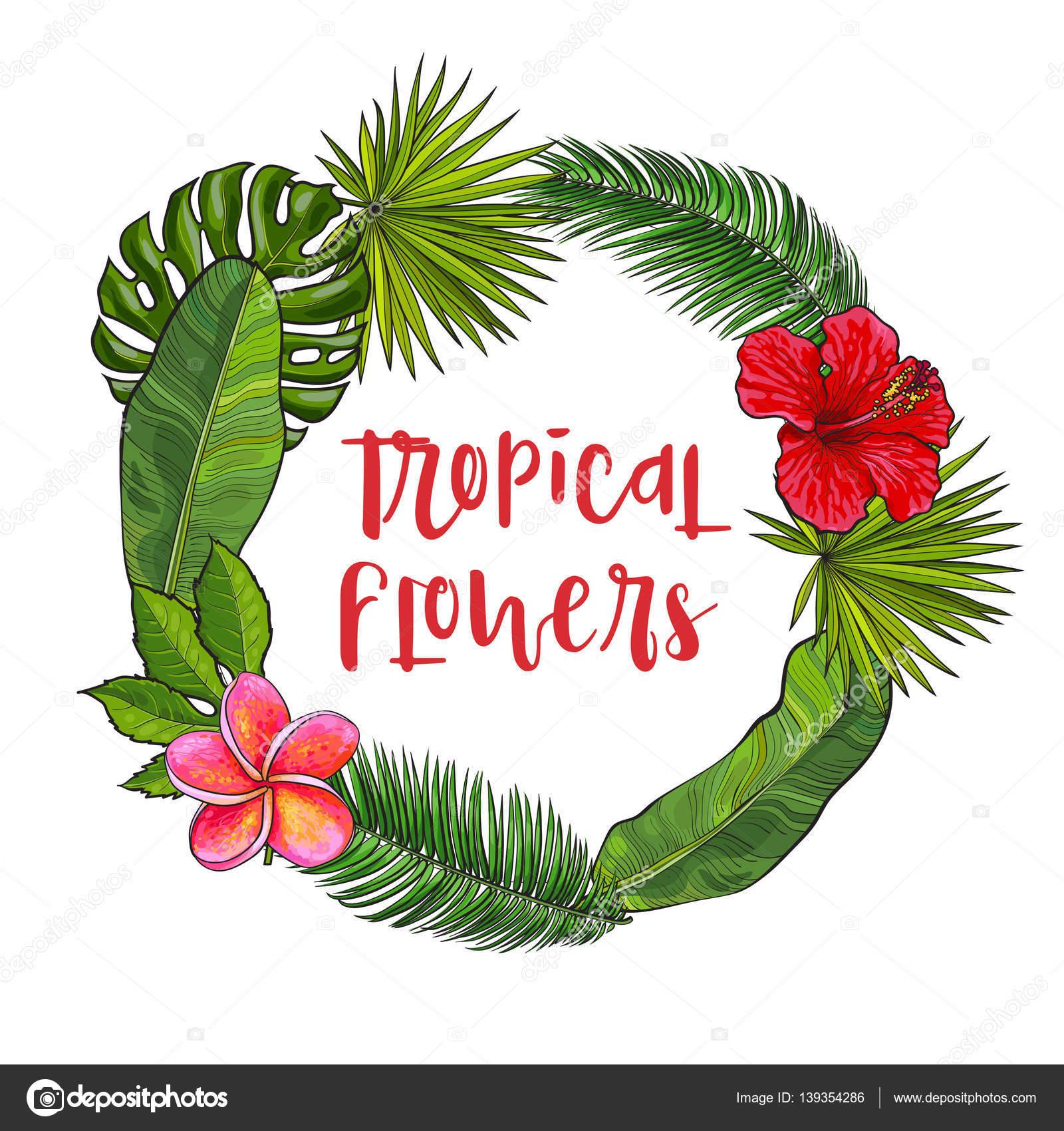 Картинки пальмовых листьев