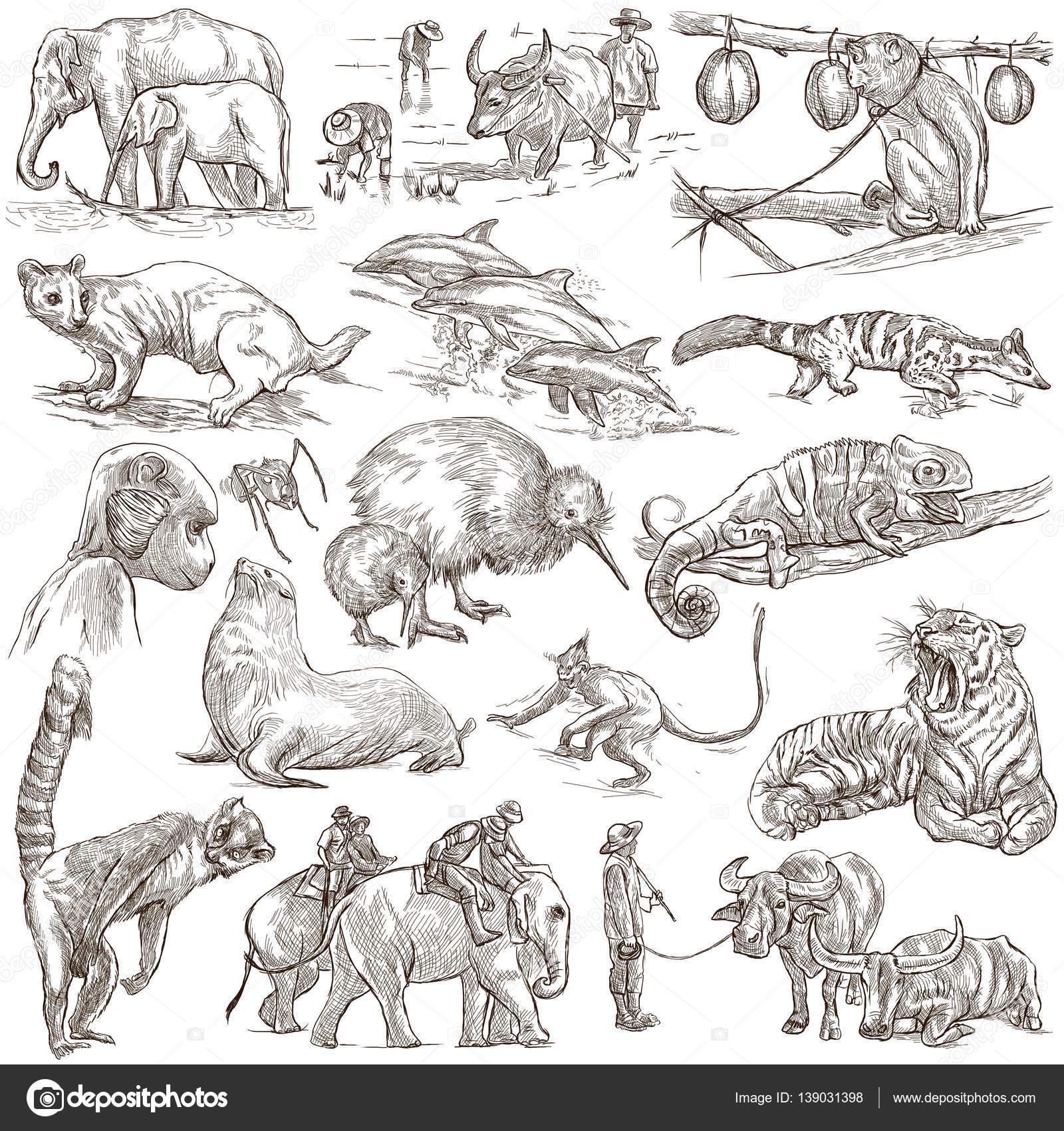 世界の動物。手書き、フルサイズのイラスト。ライン アート画像のコレクションです。白の背景上に描画 \u2014 [著者]の写真 kuco