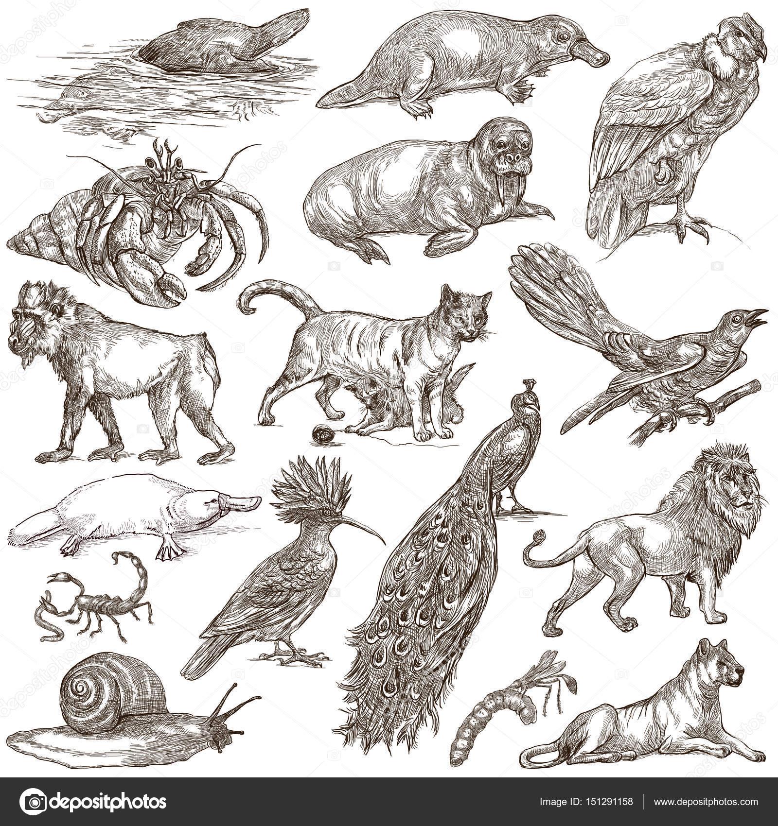 世界各地的动物.手绘插图的集合.手绘草图.艺术线条.