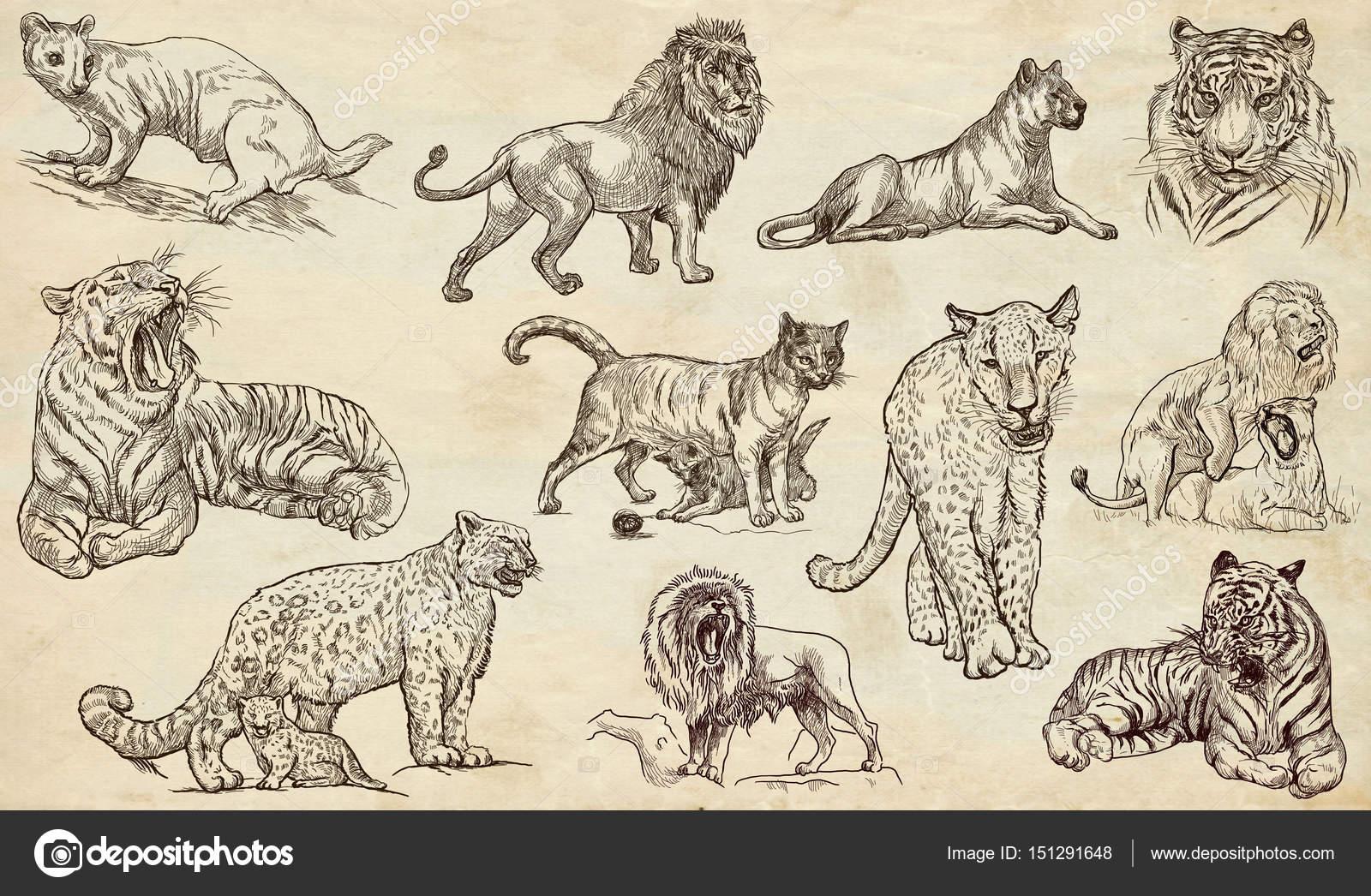 手绘插图的集合.手绘草图.艺术线条.画在旧纸上— 照片作者 kuco