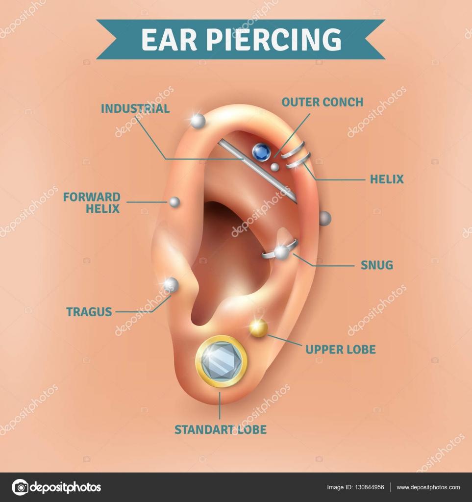 Проколоть уши схема уха
