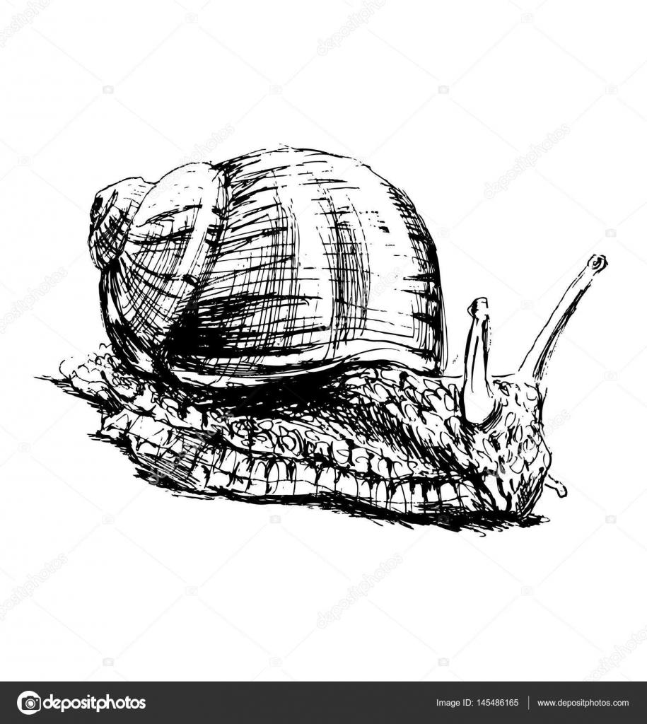 手绘蜗牛.矢量图– 图库插图