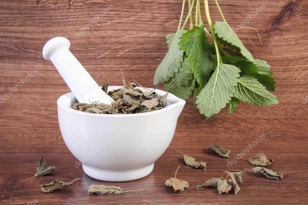 verde fresco y secado blsamo de limn en el mortero herbolaria medicina alternativa u