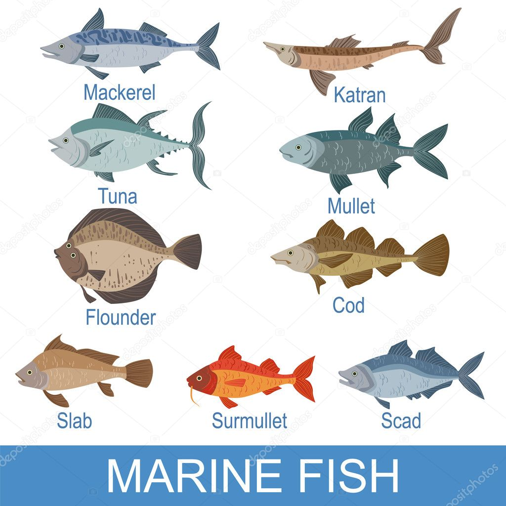 Sea Fish Set With Names — Stock Vector #128218404