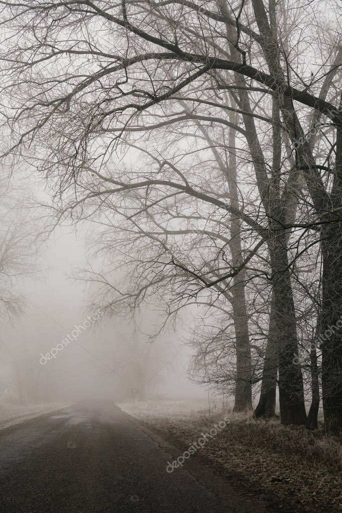 Фотообои Foggy road and forest trees. Early morning landscape, frost on the ground. noise film effect. vertical