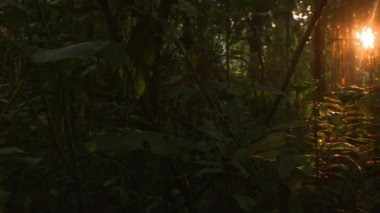 Amazon Rainforest at sunrise