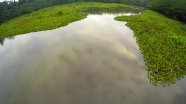 Amazon Rainforest - Lake - Swamp