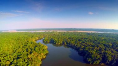 Aerial - Amazon Rainforest - epic flight