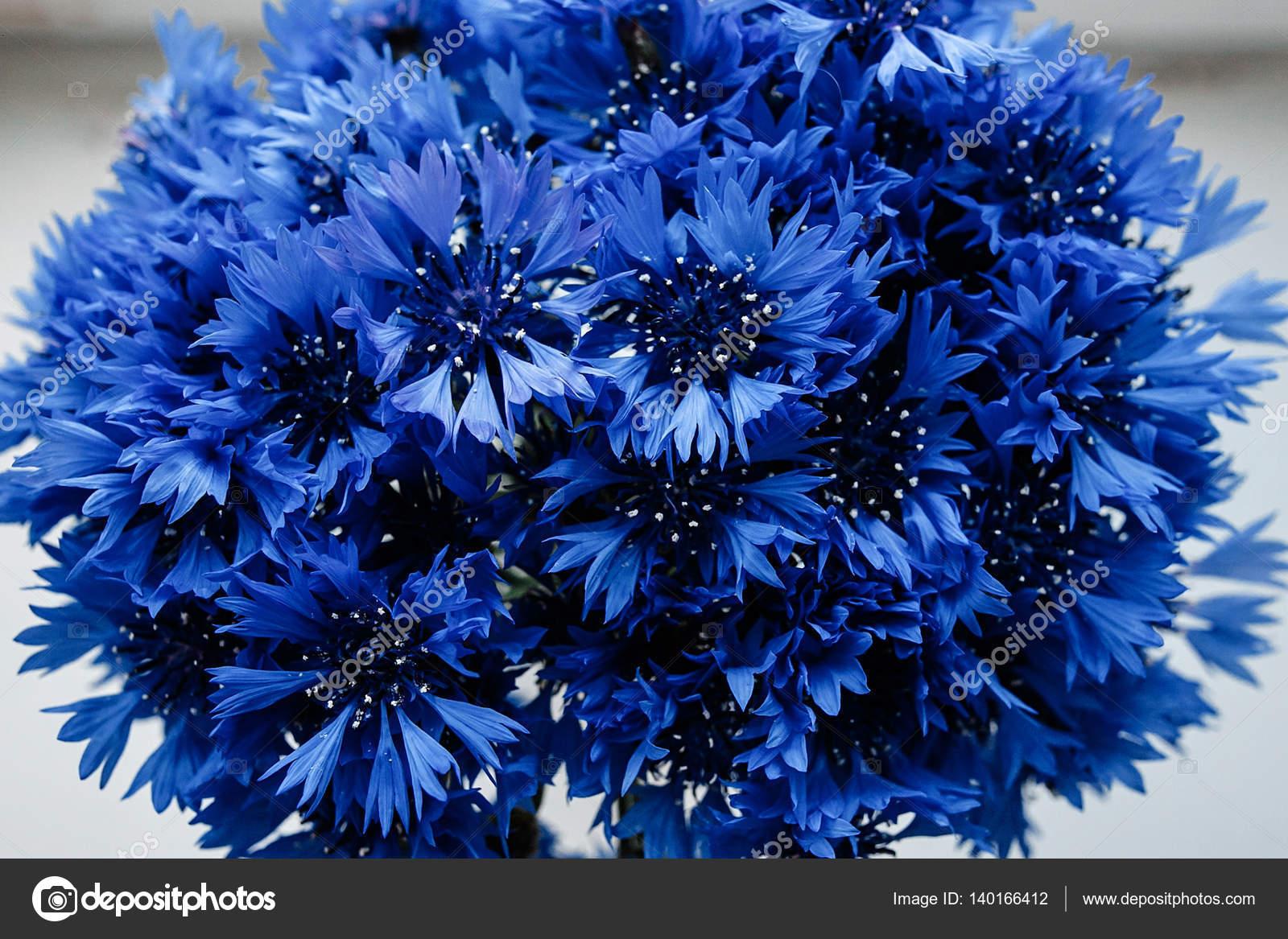 Фото цветов букетов васильков