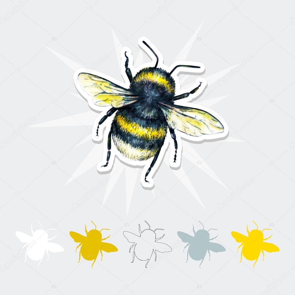 Colorful Anatomy Of A Bumble Bee Image - Physiology Of Human Body ...