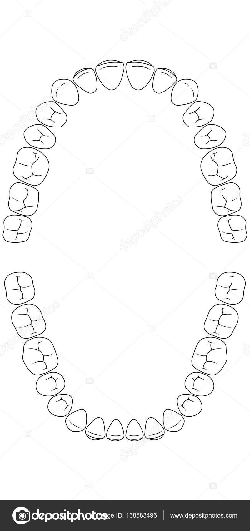 Teeth Charts  BesikEightyCo