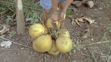 Farmer cutting coconuts