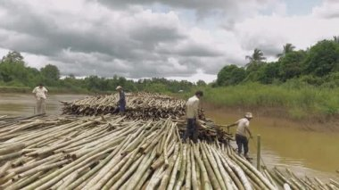Farmers stacking bamboo