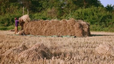 Farmers stacking hay
