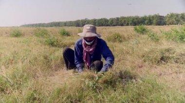Farmer cutting grass