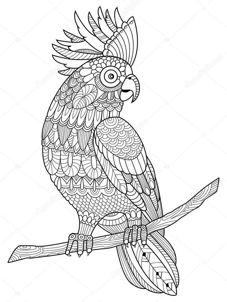 Papuga Kakadu Kolorowanka Dla Dorosłych Wektor Grafika