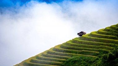 Rice fields on terraced of Mu Cang Chai, YenBai, Vietnam