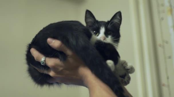 Видео чёрно белый кот