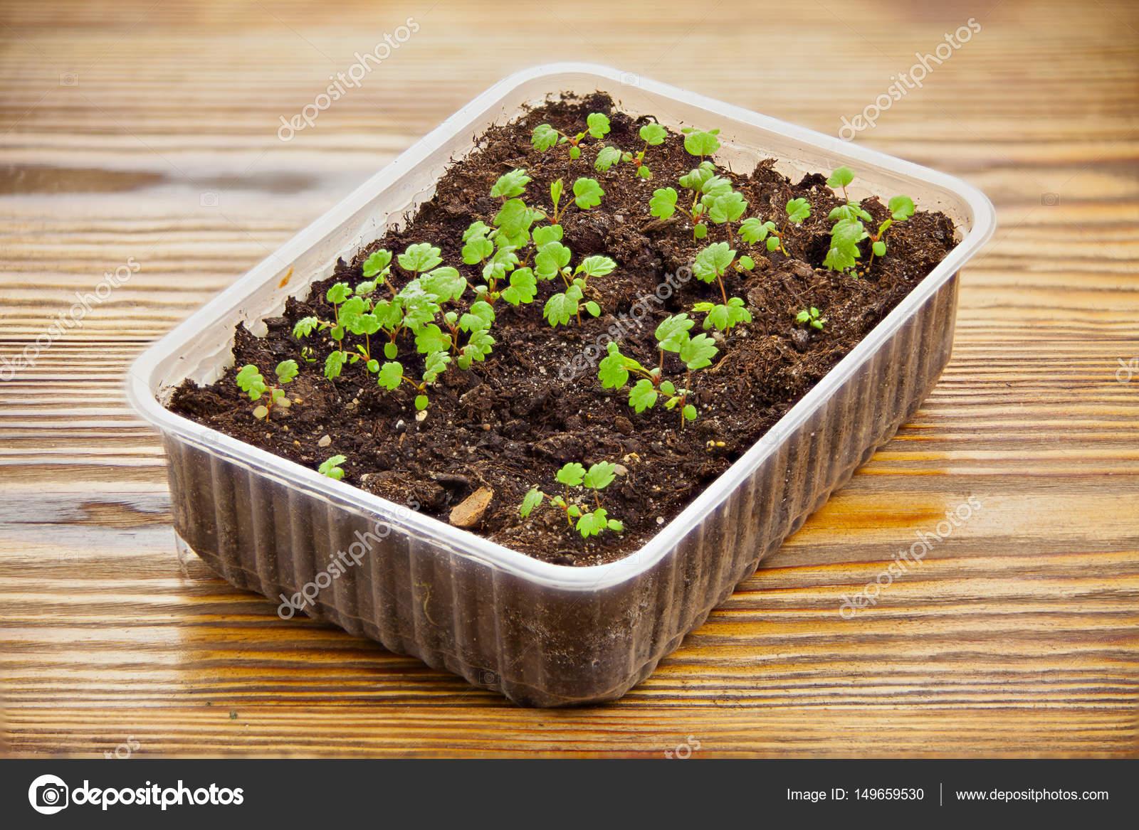 Когда, и как правильно сажать клубнику, чтобы получить хороший урожай?