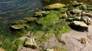 Green algae in the surf zone on the Black Sea