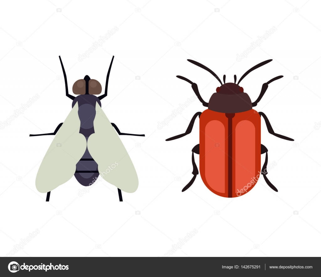 Worksheet Butterfly Beetle insect icon flat isolated nature flying butterfly beetle ant and wildlife spider grasshopper or mosquito cockroach