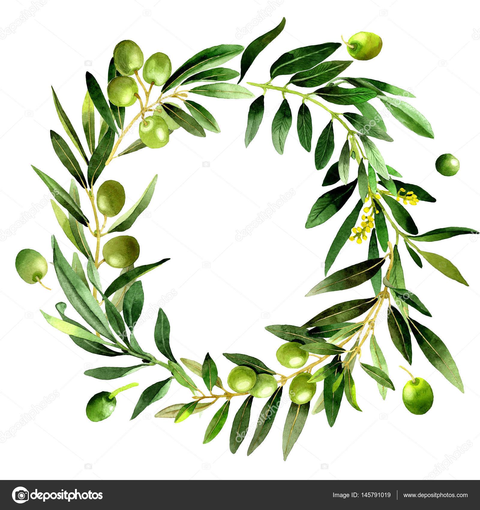 全名的植物︰ 一棵橄榄树枝.