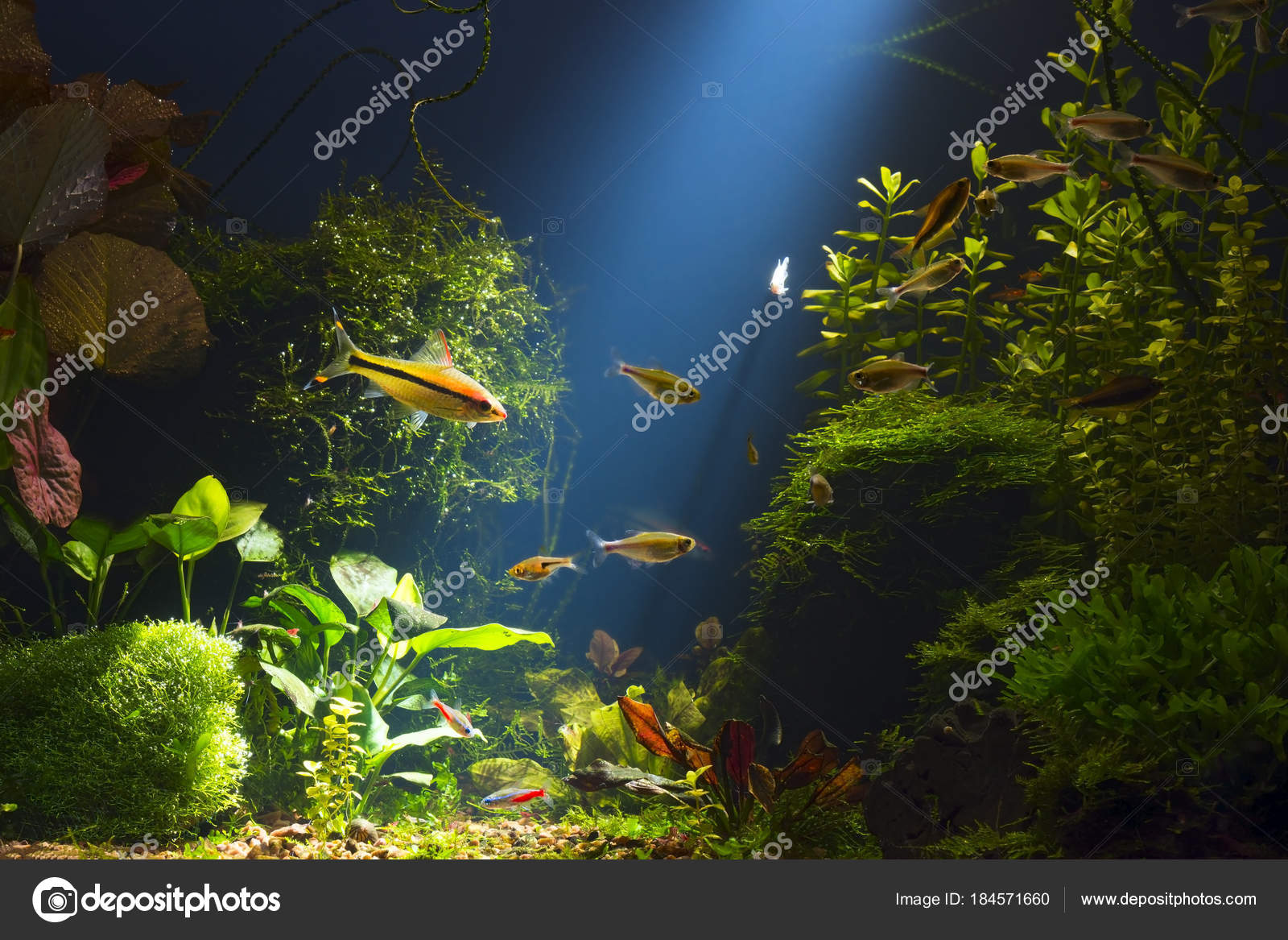 Pesci x acquario acqua dolce for Allevamento pesci acqua dolce