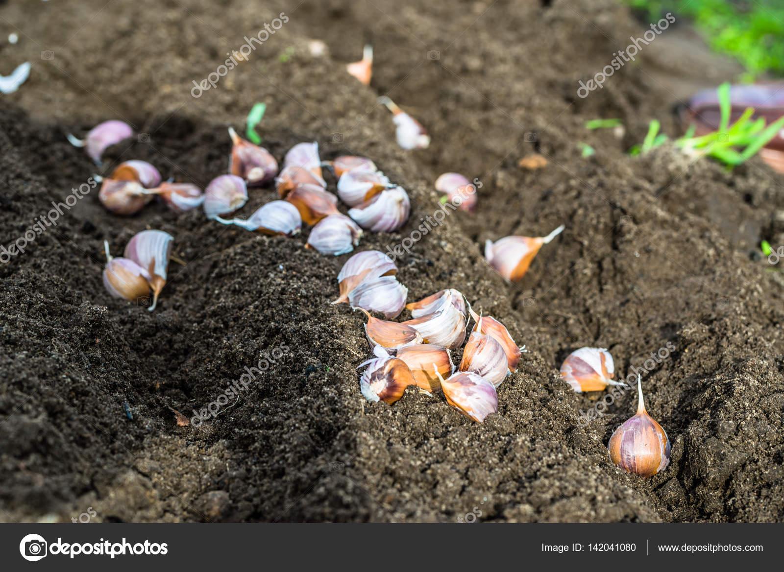 Посев под зиму овощей и цветов. Мой сад, огород. Копилка дачного опыта