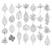 28 hand drawn leaves set Can be used for invitations greeting wedding anniversary cards stationery