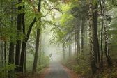 Forest path in misty weather