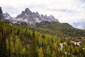 Aerial view of huge green healthy pine forest in Dolomites Alps