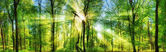 Forest panorama with enchanting rays of sunlight