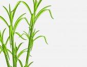Bambus rostlin pozadí
