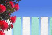 Pohutukawa virágok virága fából készült kerítés, Új-Zéland