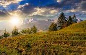 Spruce forest on grassy hillside in tatras at sunset