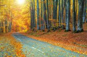 Spectacular romantic road in the autumn colorful forest