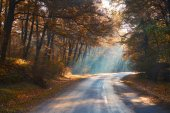 Misty autumn forest road