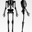 Постер, плакат: Human Skeleton Transparent Set