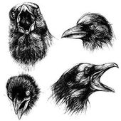 Crow head traditional drawing line work vector for use Set 01